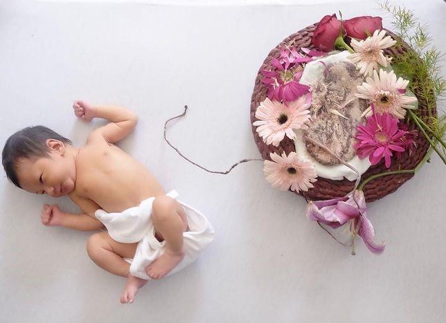 poród lotosowy łożysko